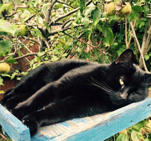 Dawn Anderson's cat, Evil Evie.